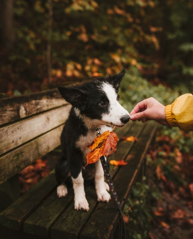 dog holding a fall leaf